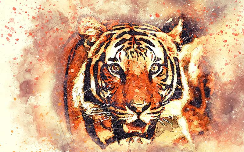 Wildlife tiger painting